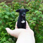 fekete tunemezelt kutya