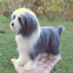 bearded collie gyapju