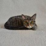 gombolyu cica hasonmas szobor