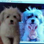 hasaló kutya1