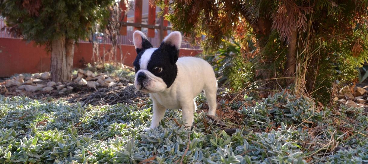 francia bulldog nemezelt