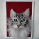 nemez cica2